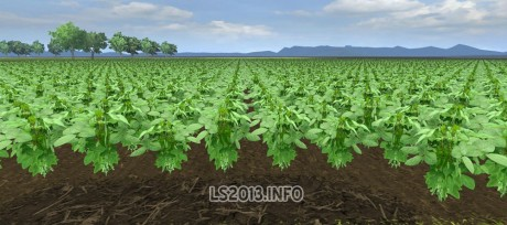 Authentic-Soybean-Texture-460x204-1